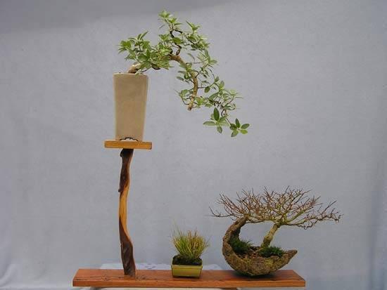 Dasu bonsai studios shohin bonsai display stand s for Unusual bonsai creations